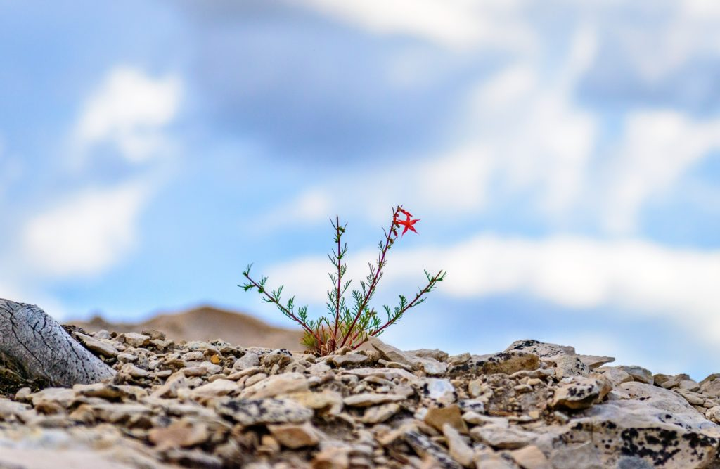 10 Ways to Build Resilience